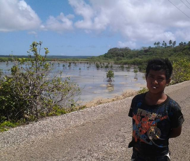 vavau-mangrove