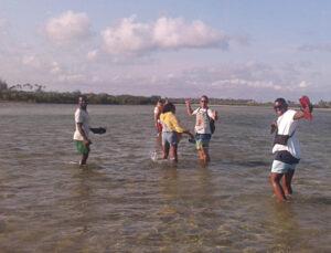 ilha mocambique mangrove